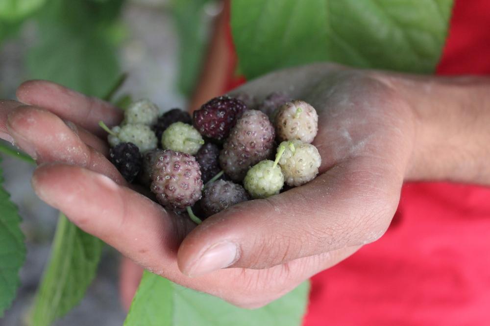Toot berries (haaahhh)
