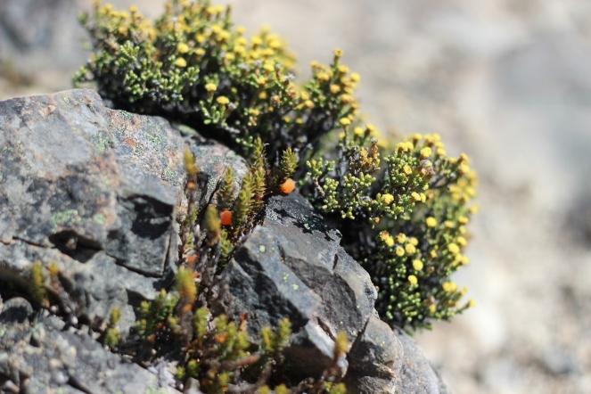 Cool alpine berries!