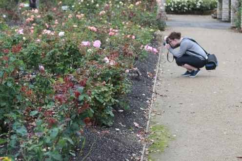 Gloria taking photos of the rose garden