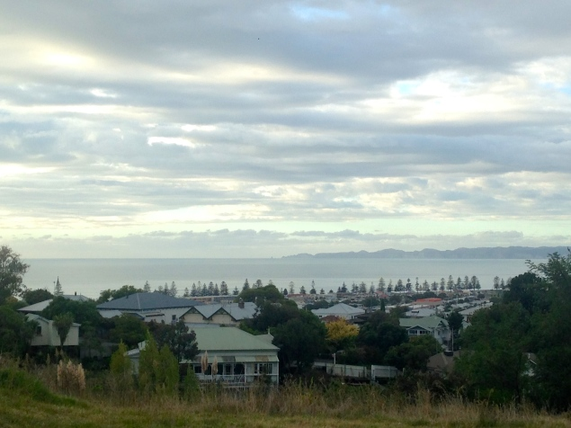 Napier from the hill