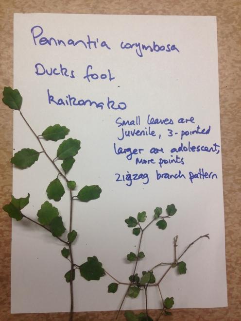Examples of plant species