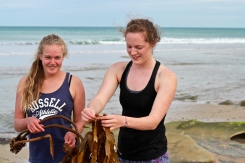 We found cool seaweed