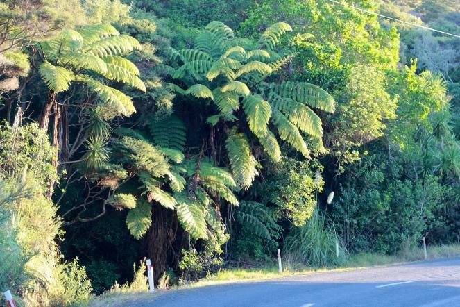 Fern Trees! Wat!