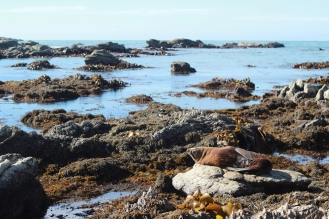 Spot the seal