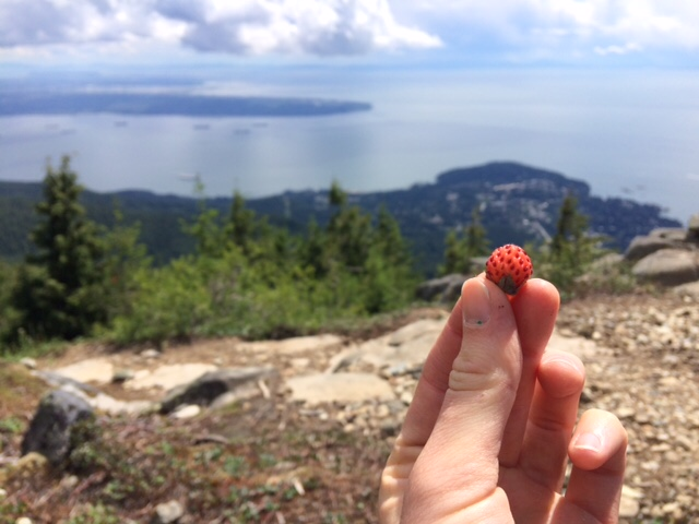 Wild strawberry on Eagle Bluffs