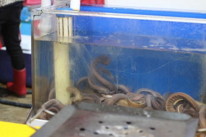 we ate these hagfish